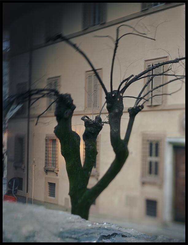 JoAnn Verburg, Pollard Tree in Between, 2011, 23 x 17.75 inches, edition of 10