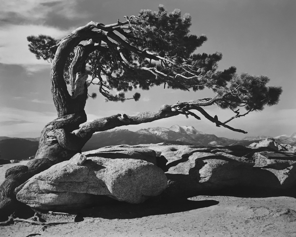 Ansel Adams - Jeffrey Pine Sentinel Dome Yosemite 1940