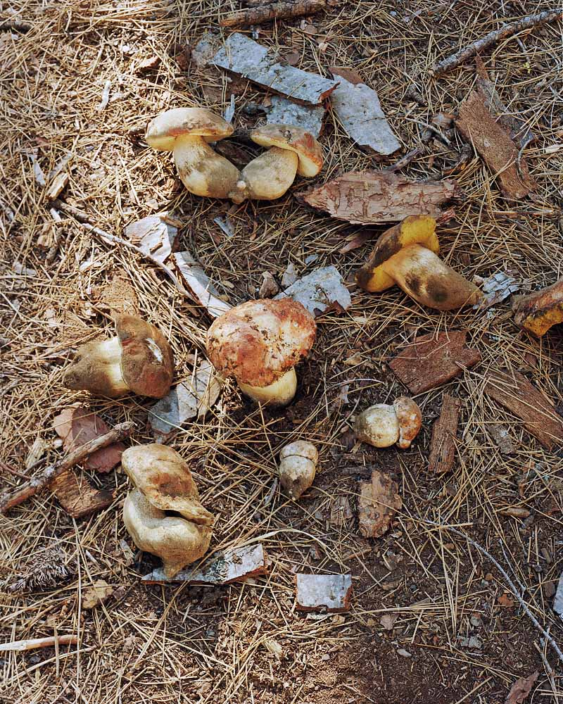 Eirik Johnson, Spring boletes, mushroom camp near Sisters, Oregon, 2011