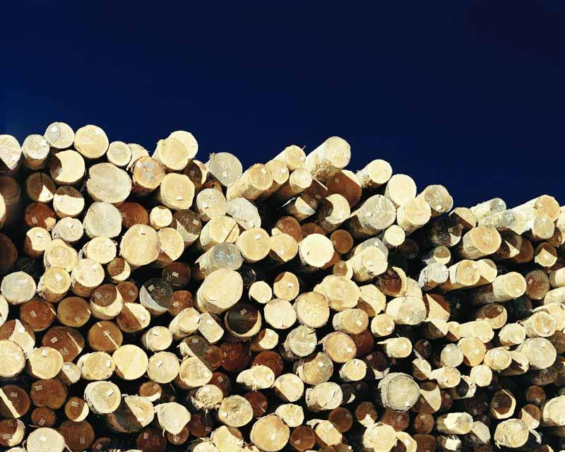 Eirik Johnson, Stacked logs in Weyerhaeuser sort yard, Cosmopolis, Washington, 2007