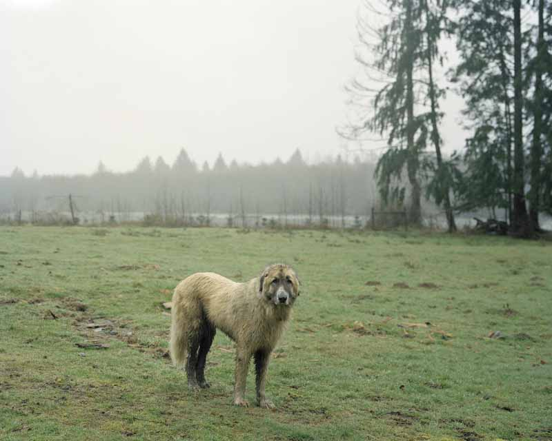 Eirik Johnson, Tola, Lower Hoh River, Washington, 2007