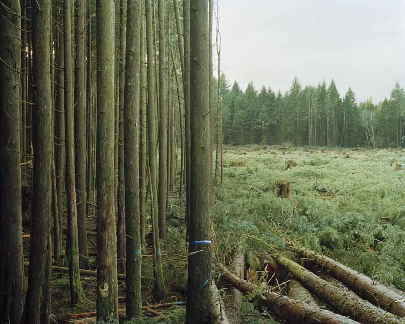 Eirik Johnson, Freshly felled trees, Nemah, Washington, 2007