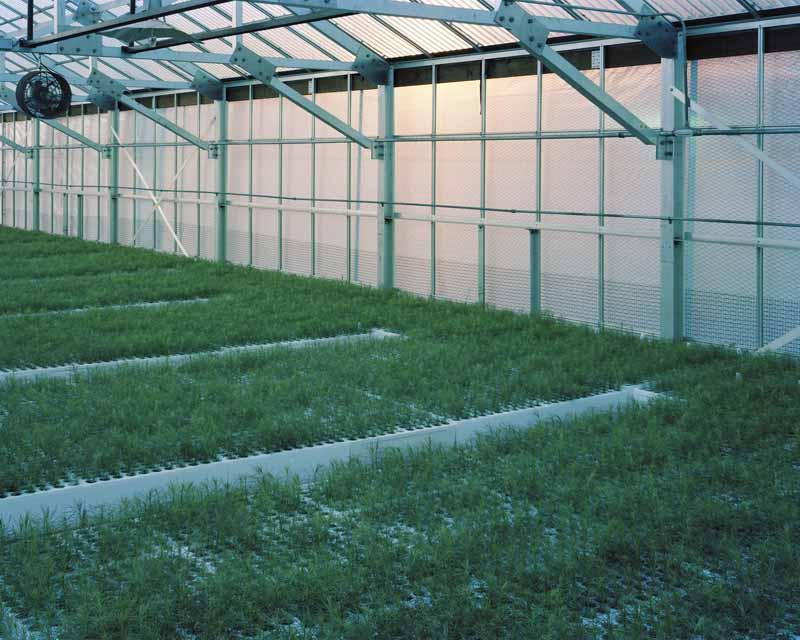 Eirik Johnson, Western larch seedlings, Webster Forest Nursery, Tumwater, Washington, 2007