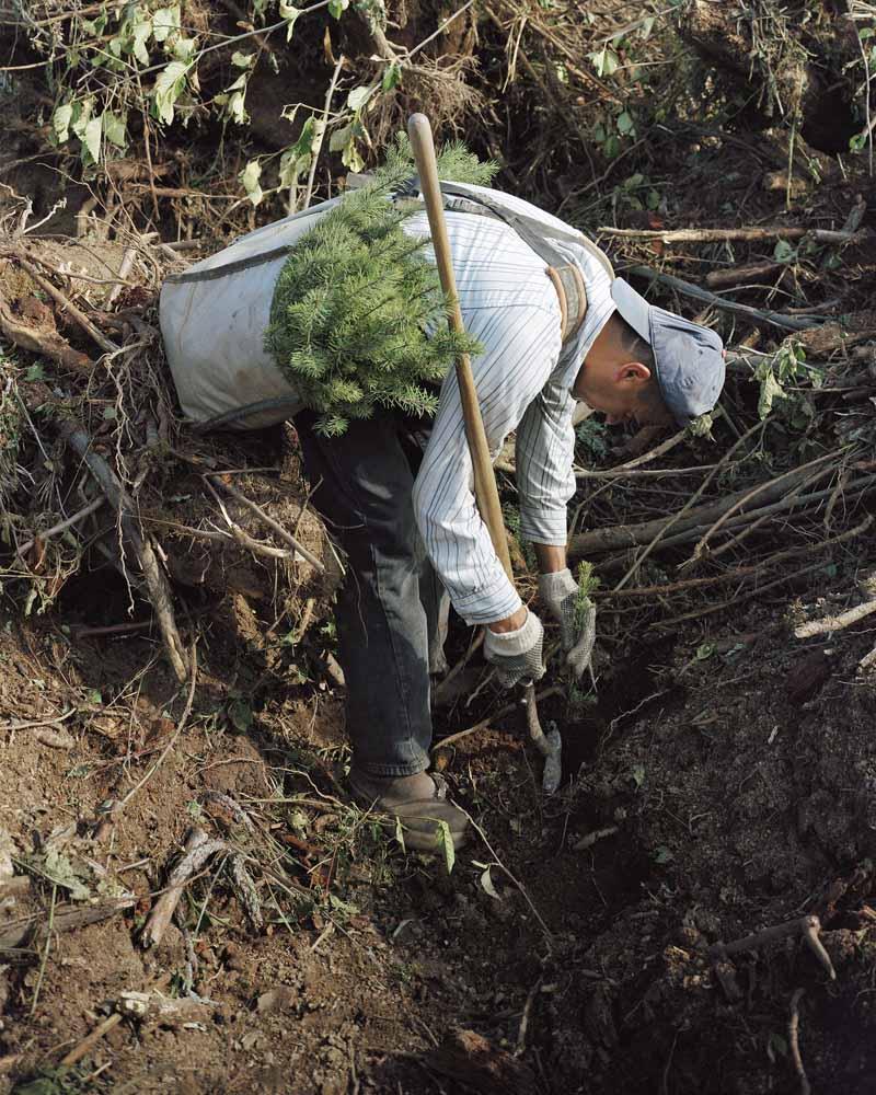 Eirik Johnson, José planting Douglas fir seedlings outside Rainier, Oregon, 2007