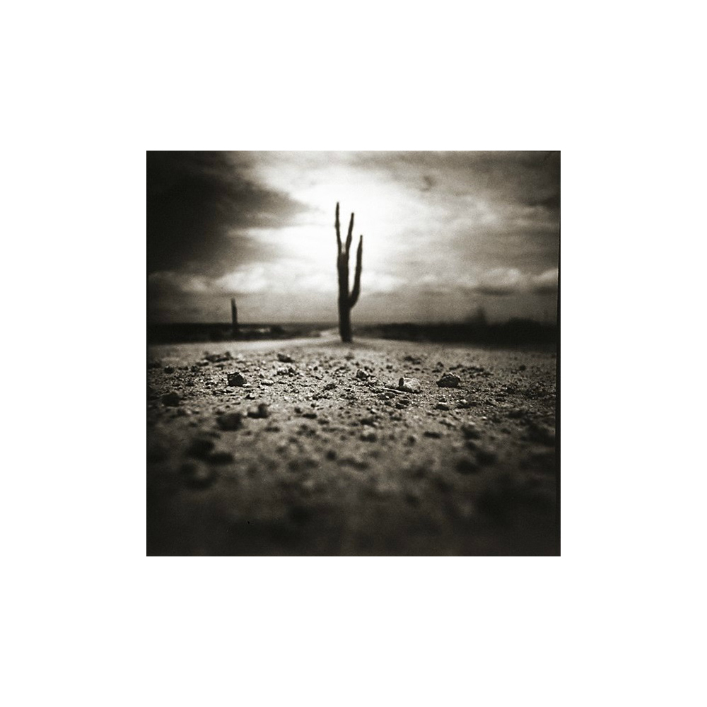 James Fee, Three Fingered Cactus, San Felipe, Mexico, 1995, toned gelatin silver print, 9 x 9 inches, $3500.