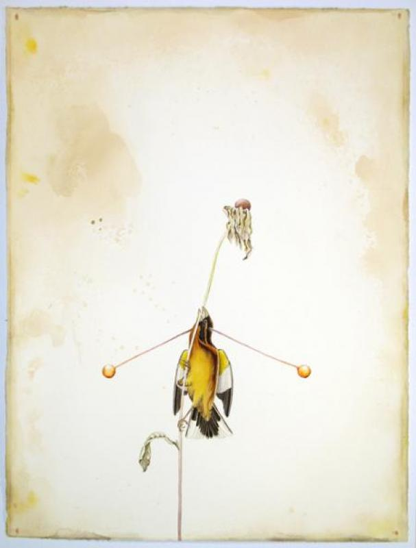 Justin Gibbens, Orbed Grosbeak, 2008, watercolor, graphite, gouache, acrylic and coffee on paper, 30.25 x 22.75 inches, 44 x 29.5 inches framed, $2,000.