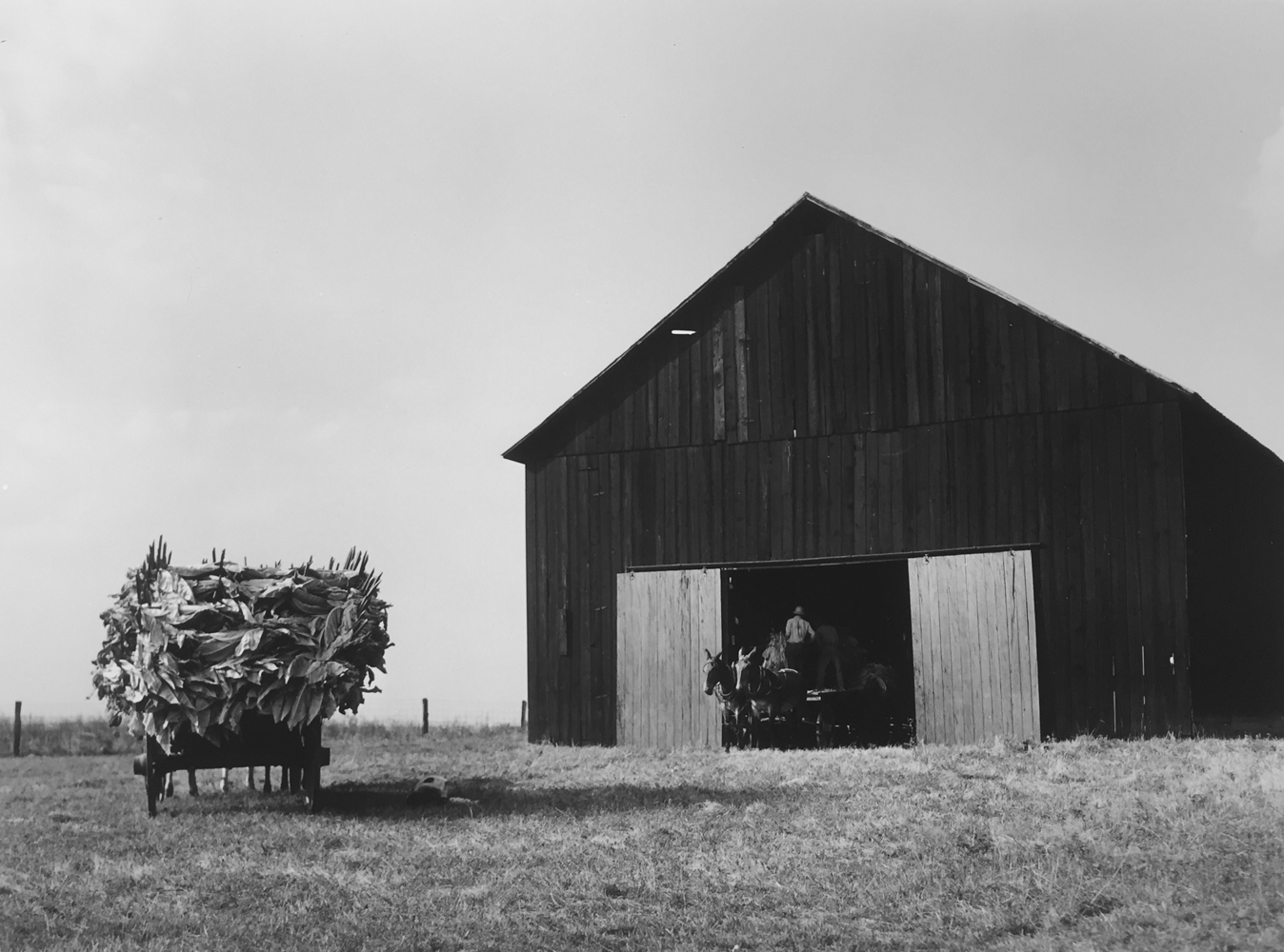 Marion Post Wolcott, Wagons deliver tobacco to a barn on the farm of Russell Spears, New Lexington, Kentucky, 1940, gelatin silver print, 11 x 14 inches, price on request