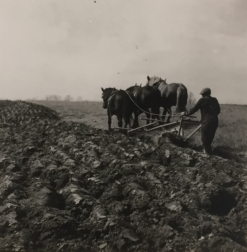 Marion Post Wolcott, Plowing, near Waterford, Virginia, 1951, gelatin silver print, contact print, price on request