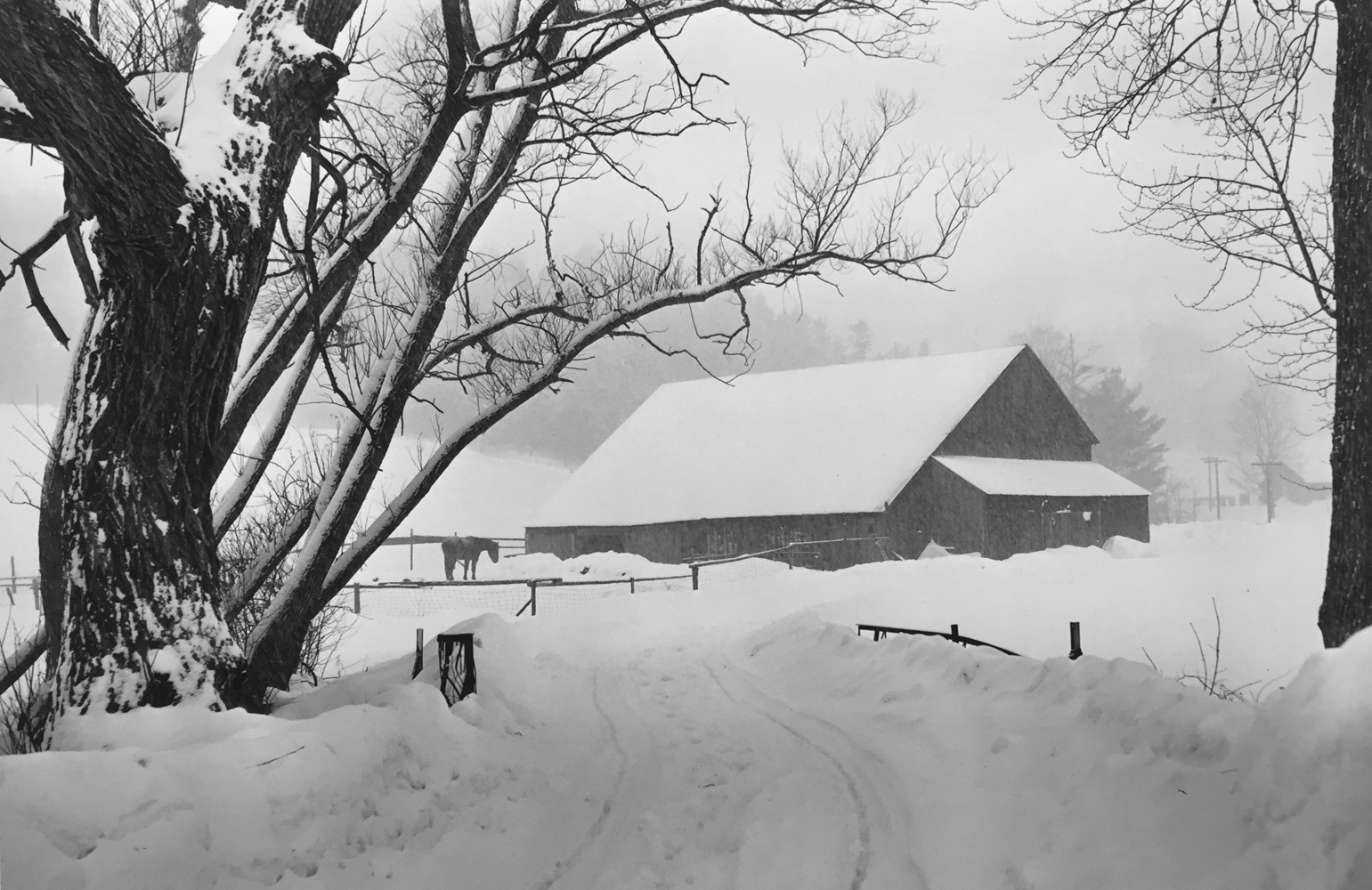 Marion Post Wolcott, Barnyard blizzard, Near Woodstock, Vermont, 1940, gelatin silver print, 11 x 14 inches, price on request