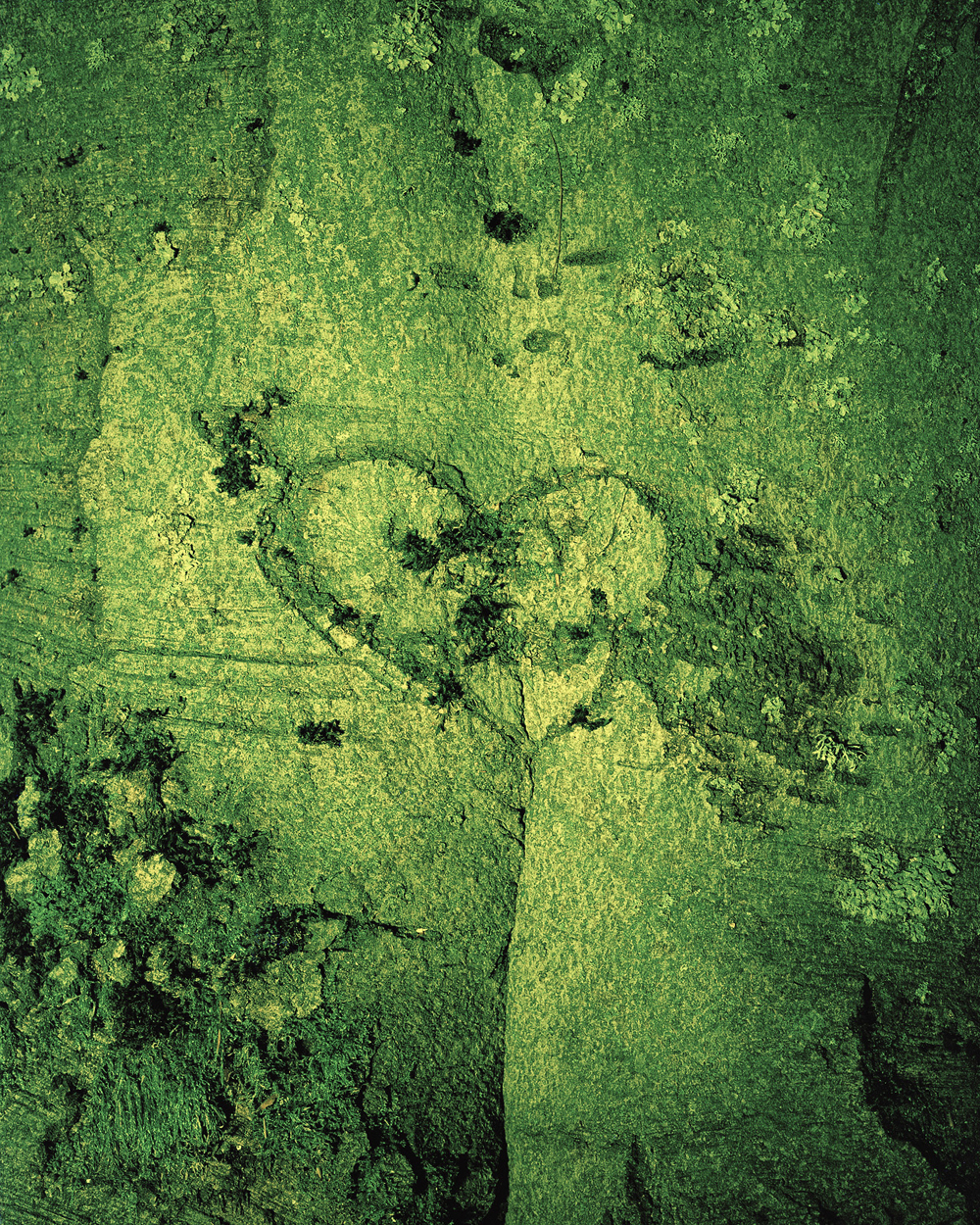 Eirik Johnson, GREEN VALENTINE, 2012, archival transparency and LED light box, 14 x 11 inches, edition of 5, $2800.