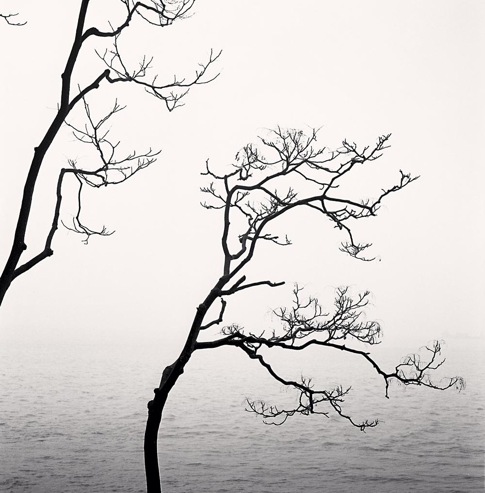 Michael Kenna, Ailanthus Trees and Yangze River, Study 1, Nantong, Jiangsu, China, 2015