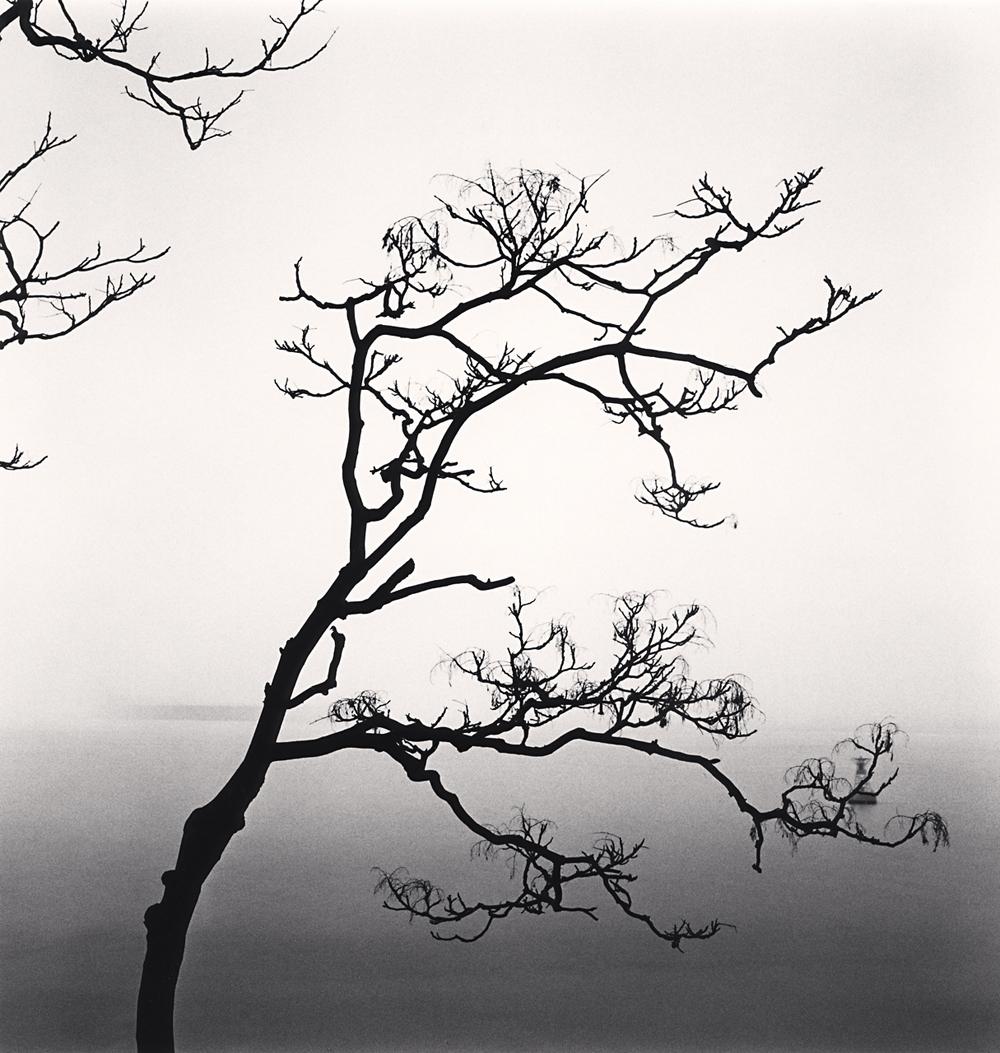 Michael Kenna, Ailanthus Trees and Yangze River, Study 2, Nantong, Jiangsu, China, 2015