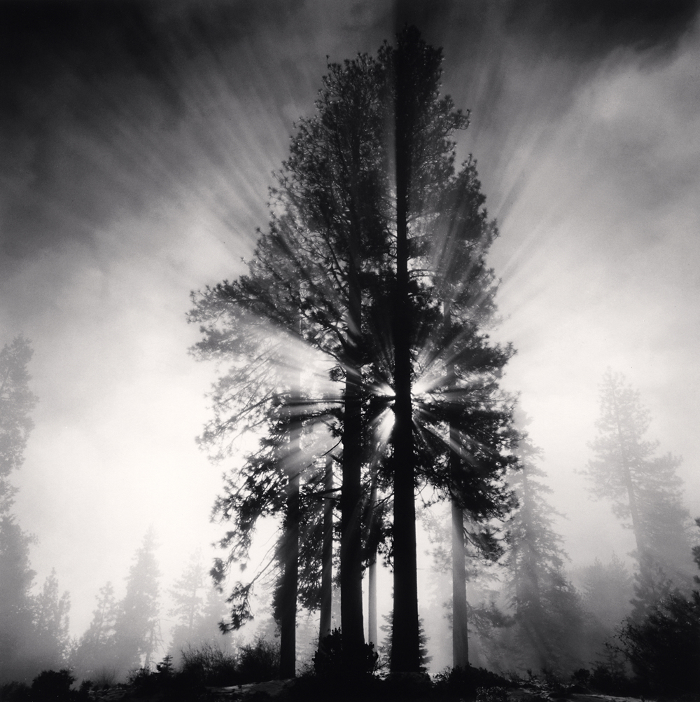 Michael Kenna, Avenue of the Giants, California, USA, 1998