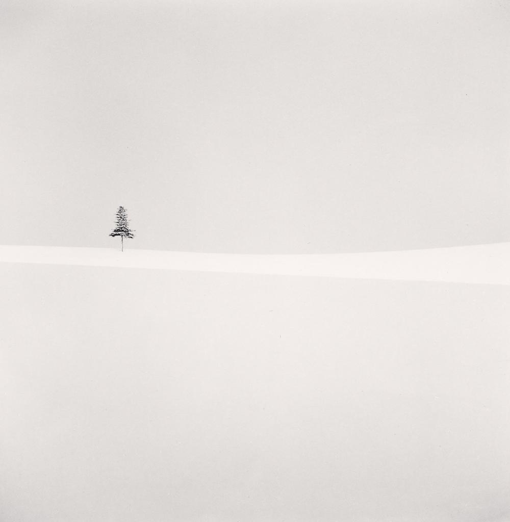 Michael Kenna, Delicate Tree, Furano, Hokkaido, Japan, 2012