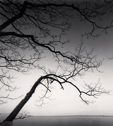 Michael Kenna, Eloquent Trees, Kussharo Lake, Hokkaido, Japan. 2013