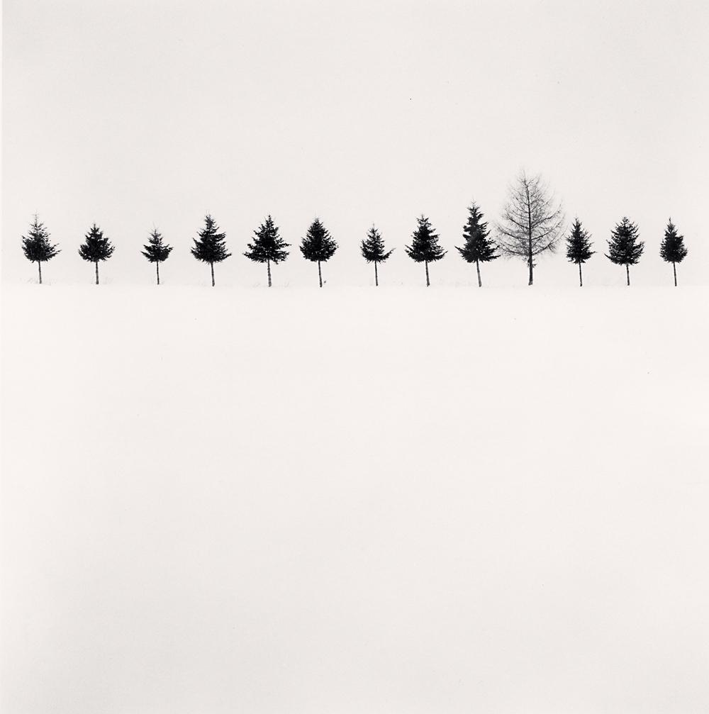 Michael Kenna, Line of Trees, Biei, Hokkaido, Japan, 2012