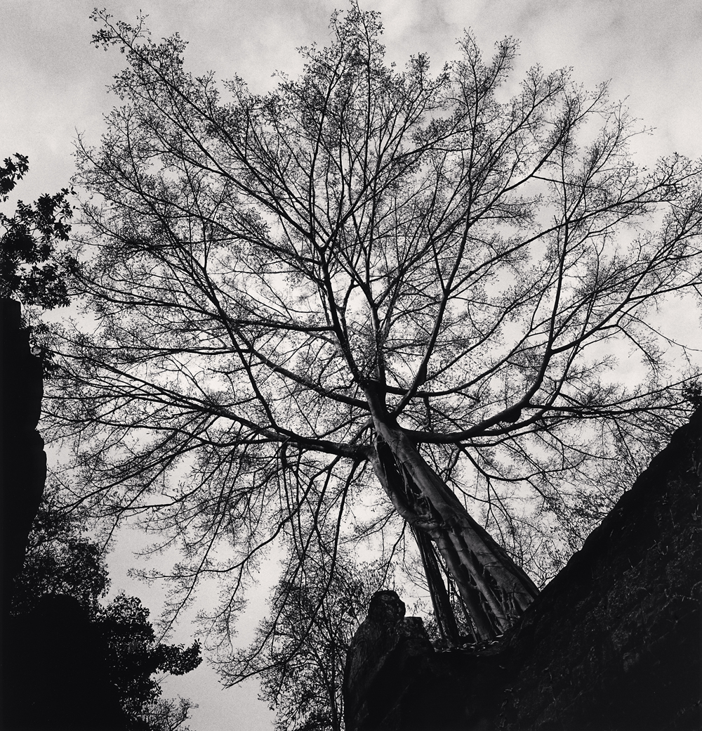 Michael Kenna, Ta Prohm Tree, Study 1, Angkor, Cambodia, 2018
