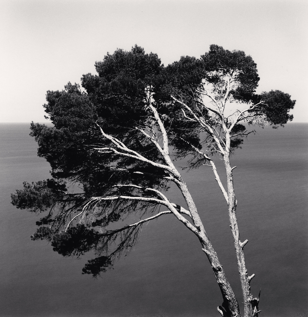 Michael Kenna, Two Pine Trees, Llucalcari, Mallorca, Spain, 2017