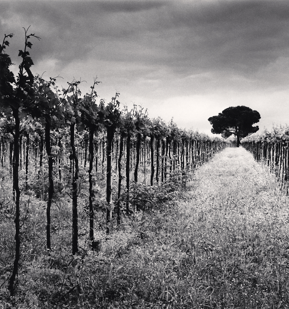 Michael Kenna, Vineyard and Stone Pine Tree, Cepagatti, Abruzzo, Italy. 2016