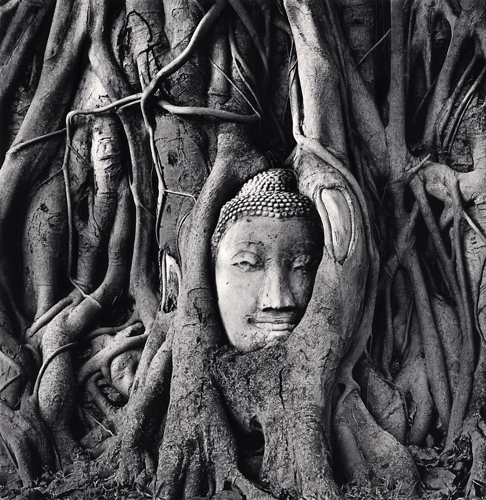 Michael Kenna, Wat Mahathat Buddha Head, Ayutthaya, Thailand, 2019