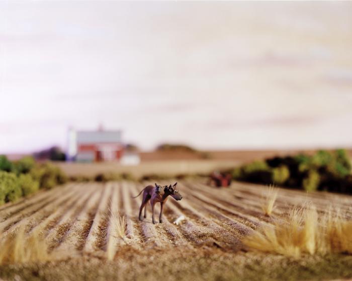 Lori Nix, Dogs, 1998