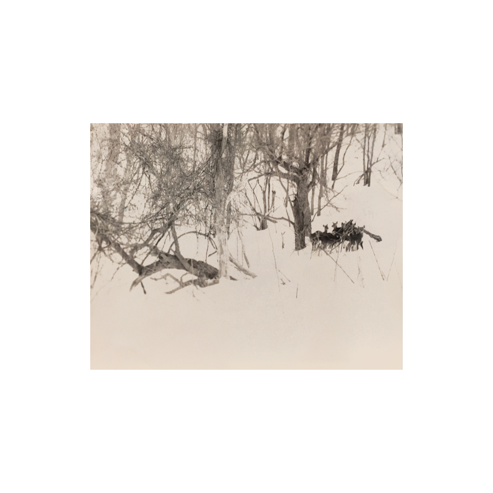 Masao Yamamoto, Nakazora (Deer in Forest), no. 1161, 2004, toned gelatin silver print, 5 x 6.25 inches, price on request