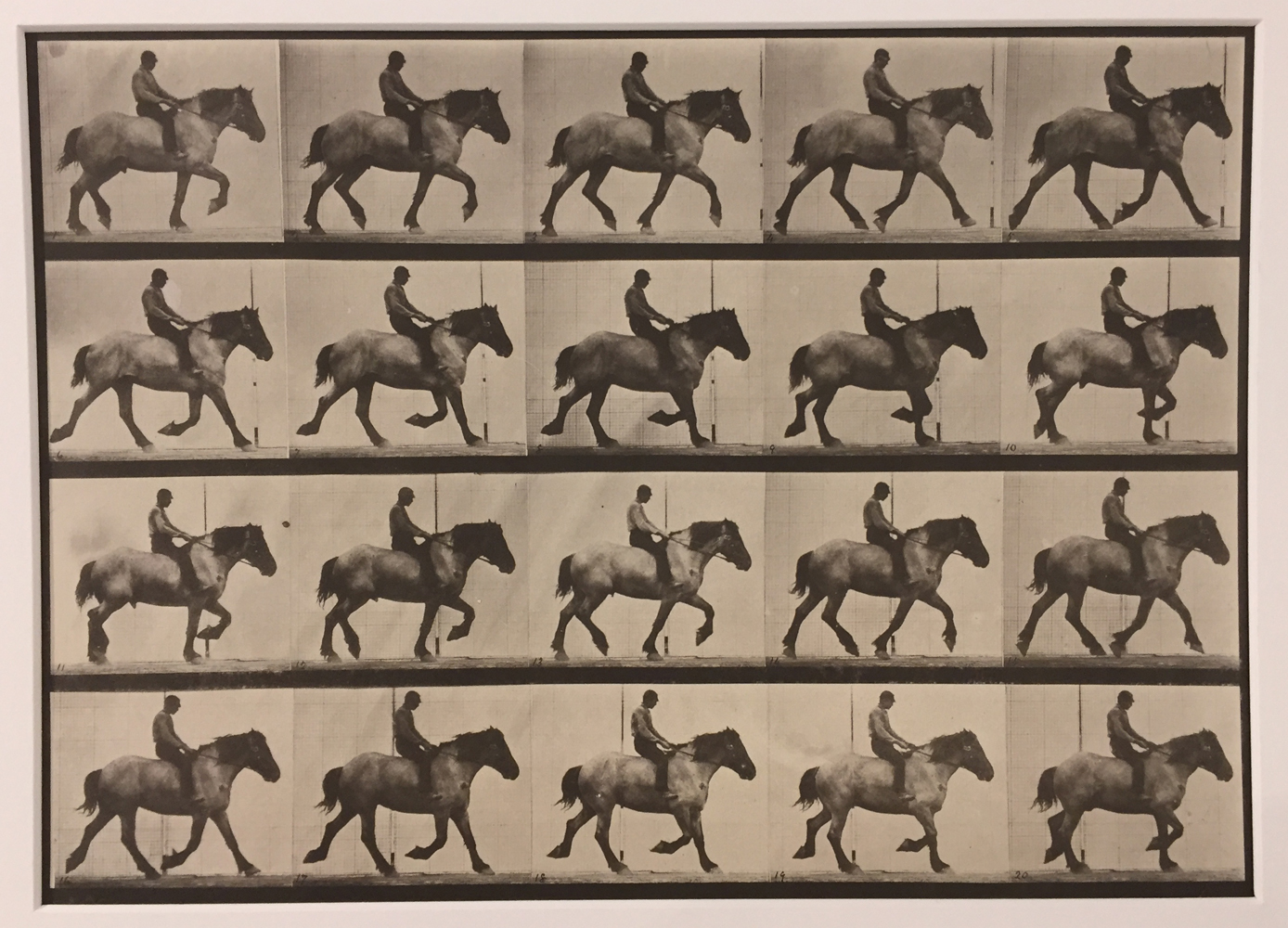 Eadweard Muybridge, Animal Locomotion, Plate 597, 1887, Vintage collotype, 9 x 12.5 inches, price on request
