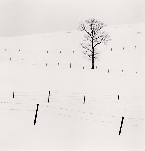 Michael Kenna, Tree and Twenty Eight Posts, Teshikaga, Hokkaido, Japan. 2013