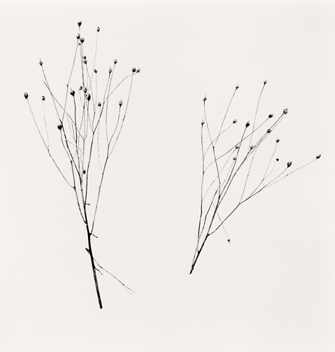 Michael Kenna, Two Winter Stalks, Biei, Hokkaido, Japan. 2013