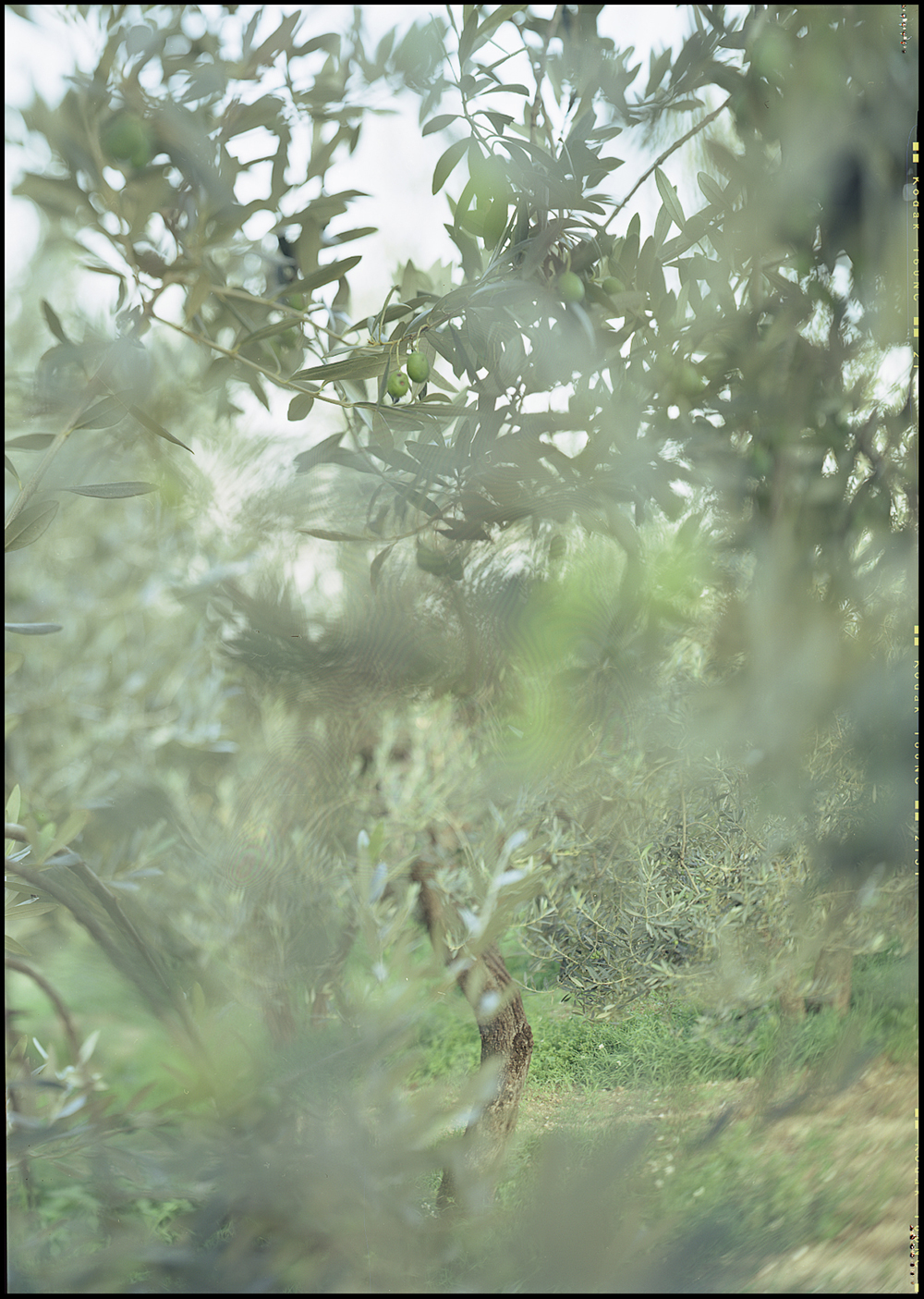JoAnn Verburg, Camouflage, 2003, chromogenic print, 24 x 17 inches, edition of 9, price on request
