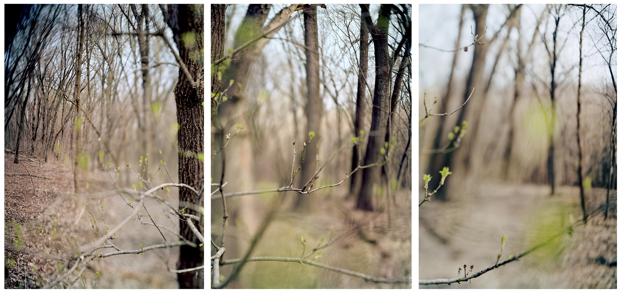 JoAnn Verburg, Hidden Falls, 2012, 3 – archival pigment prints, 24 x 58 inches, edition of 10, price on request