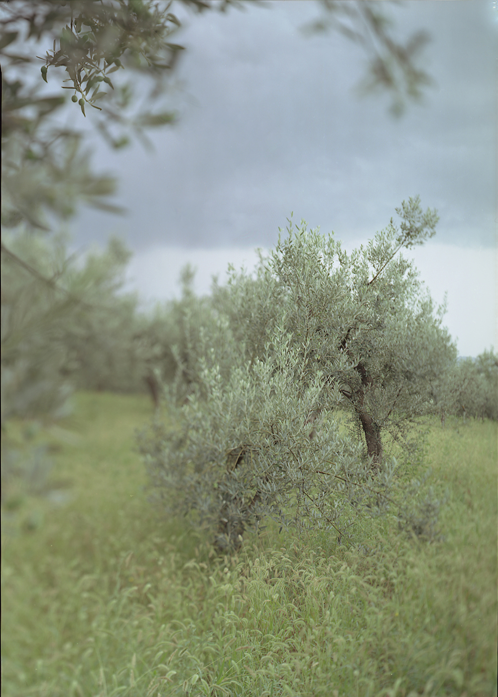 JoAnn Verburg, Little Green Tree (with Olives), 2003, 40 x 28.5 inches, edition of 9, price on request