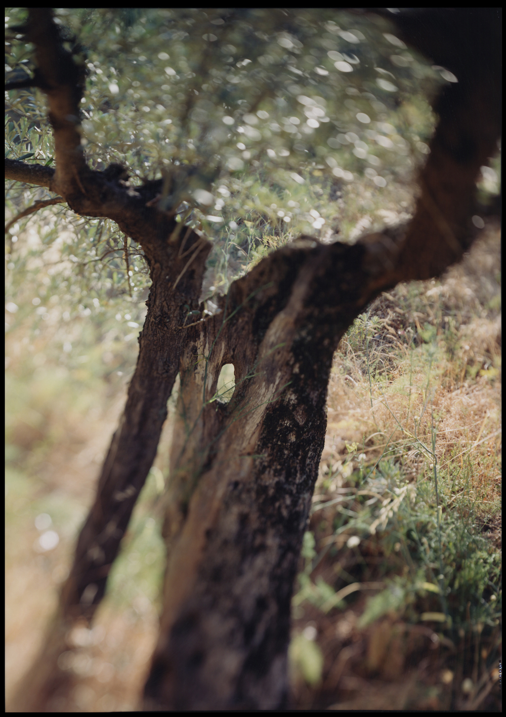 JoAnn Verburg, Under the Rocca, 2002, 40 x 28.25 inches, edition of 15, price on request
