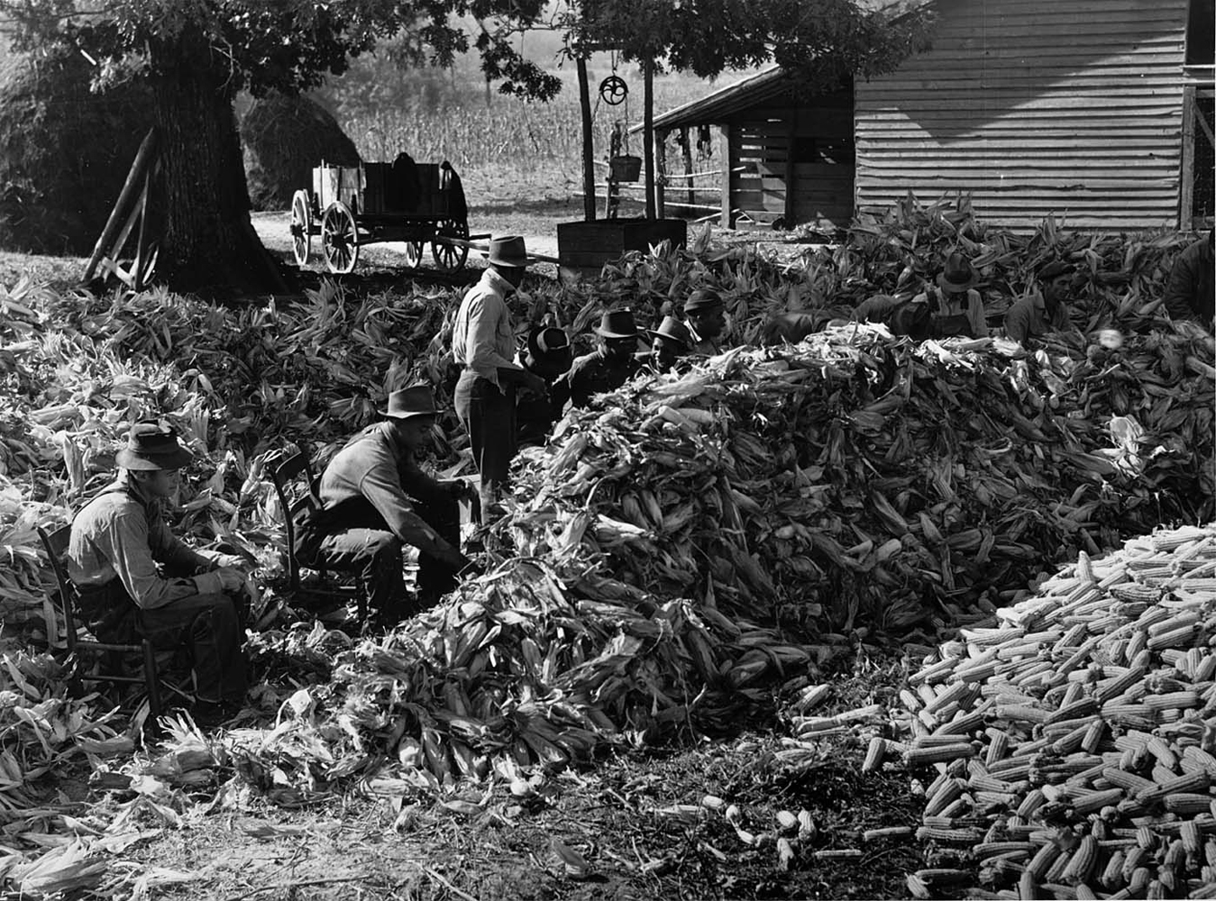 Marion Post Wolcott, Corn-shucking at the Fred Wilkins farm. Stem, North Carolina, 1939, gelatin silver print, signed, 11 x 14 inches