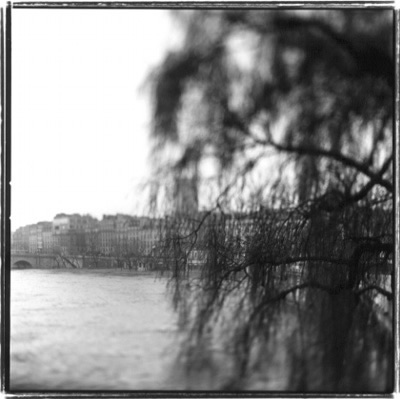 Keith Carter, Oldest Tree in Paris, 1999, gelatin silver print, 15 x 15 inches, edition of 50