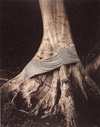 Linda Connor, Decorative Tree with Ceremonial Cloth, 1991