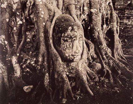 Linda Connor, Entwined Buddha, Ayutthaya, Thailand, 1988