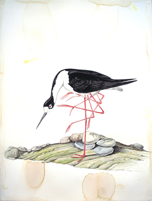 Justin Gibbens, Bird of Paradise VII. : Black-necked Stilt with Vestiges. 2008, watercolor, graphite, gouache, oolong on paper. 30×23 inches, $1,800.