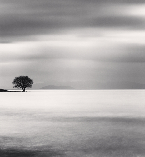 Michael Kenna, Biwa Lake Tree, Study 5, Omi, Honshu, Japan, 2007