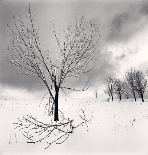 Michael Kenna, Broken Branch, Yangcao Hill, Wuchang, Heilongjiang, China, 2011
