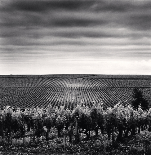 Michael Kenna, Chateau Lafite, Study 3, Bordeaux, France, 2012
