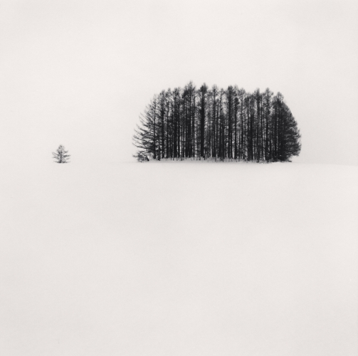 Michael Kenna, Copse and Tree, Mita, Hokkaido, Japan. 2007