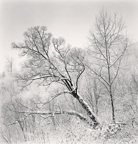 Michael Kenna, Falling Trees, Yangcao Hill, Wuchang, Heilongjiang, China, 2011
