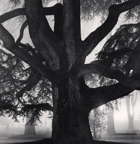 Michael Kenna, Giant Tree, Giardini Pubblici, Reggio Emilia, Italy. 2007