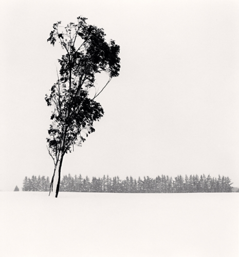 Michael Kenna, Leaning Eucalyptus, Methven, Canterbury, New Zealand. 2013