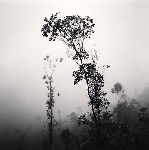Michael Kenna, Mountain Trees, Raja Mala, Munnar, India, 2008