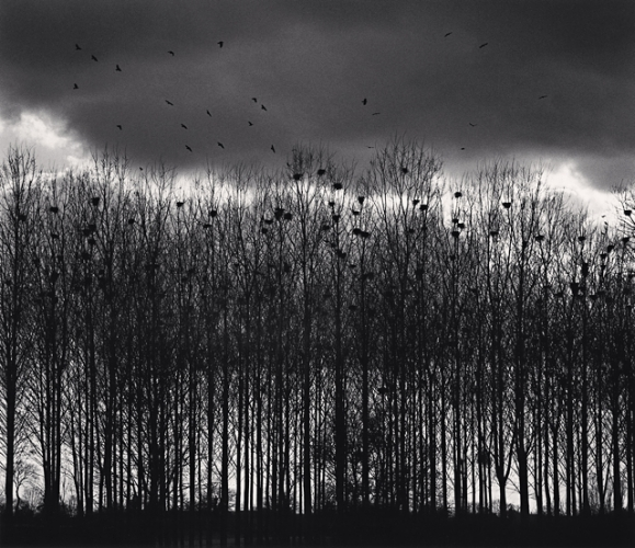 Michael Kenna, Nesting Colony, Bourgogne, France, 1997