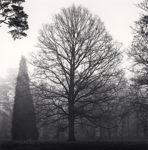 Michael Kenna, Outstanding Trees, Versailles, France, 1997