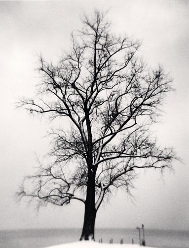 Michael Kenna, Seefeldquai Tree, Study 1, Zurich, Switzerland. 2013