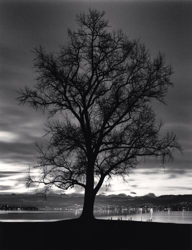 Michael Kenna, Seefeldquai Tree, Study 2, Zurich, Switzerland. 2013